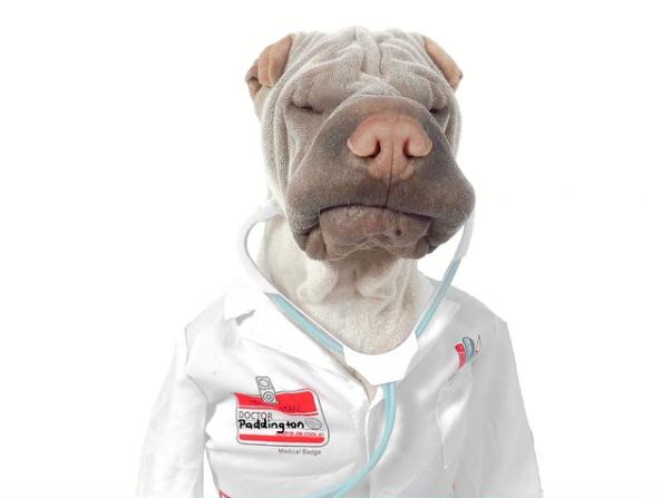 Um cachorro ou um médico? (Foto: Reprodução / Instagram)