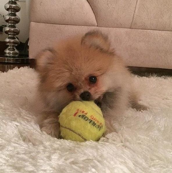 Udy com um brinquedo. (Foto: Reprodução / Instagram)