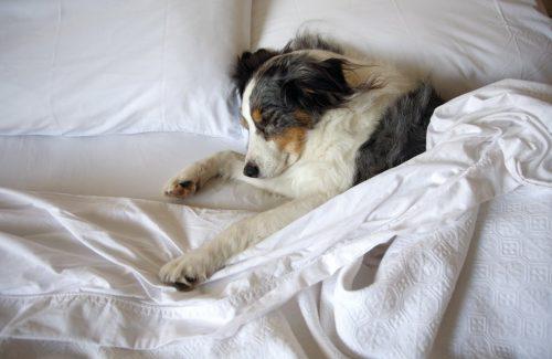 cachorros-cama-dormindo-01