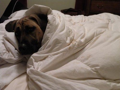 cachorros-cama-dormindo-02