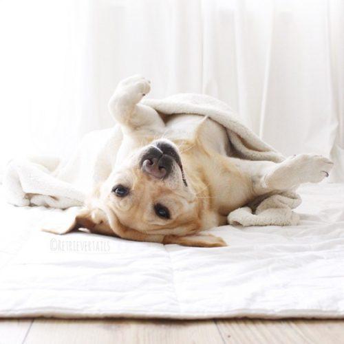 cachorros-cama-dormindo-03