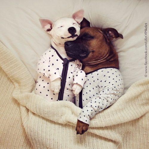 cachorros-cama-dormindo-05