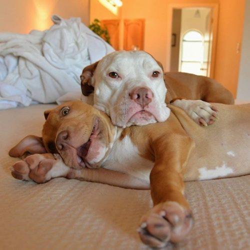 cachorros-cama-dormindo-09