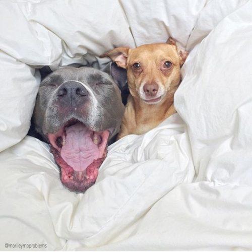 cachorros-cama-dormindo-10