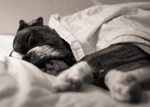 cachorros-cama-dormindo-11