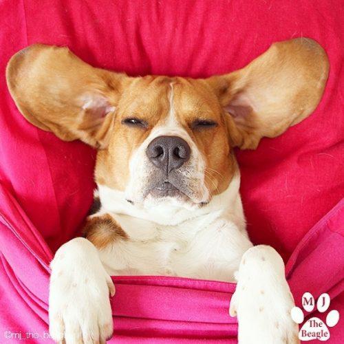 cachorros-cama-dormindo-12