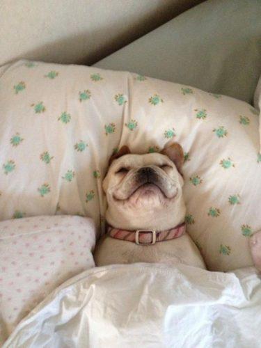 cachorros-cama-dormindo-13