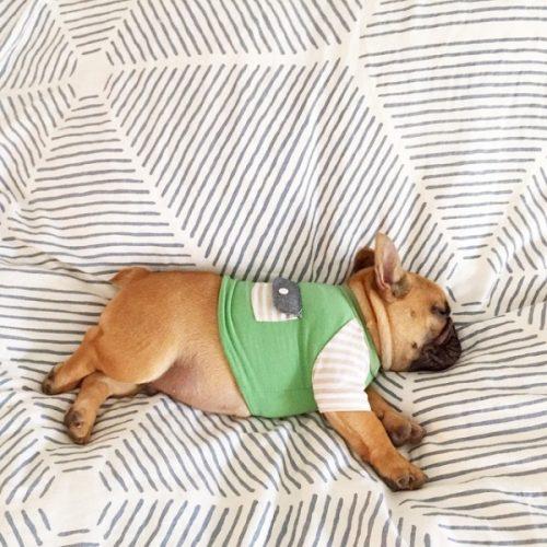 cachorros-cama-dormindo-14