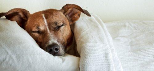 cachorros-cama-dormindo-15