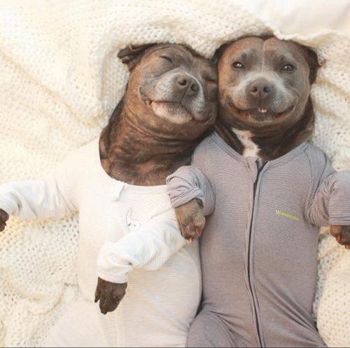 cachorros-cama-dormindo-17