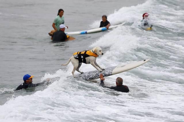 O evento era beneficente e seu lucro foi direcionado à ONG San Diego Humane Society. (Foto: Reprodução / Metro UK / REUTERS / Mike Blake)