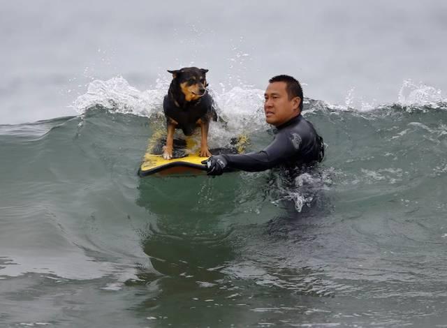 Michael Uy posiciona sua cachorra Abbie durante a competição.  (Foto: Reprodução / Metro UK / REUTERS / Mike Blake)