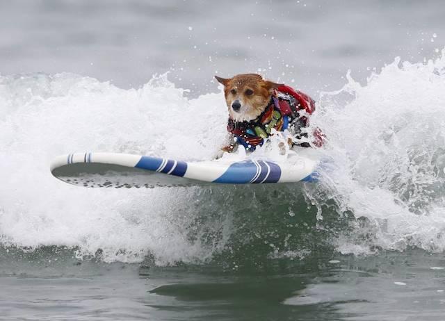 Jojo surfando.  (Foto: Reprodução / Metro UK / REUTERS / Mike Blake)