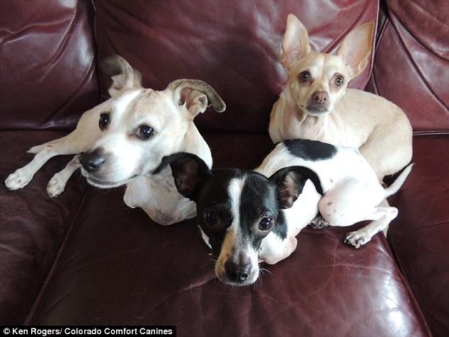 Os cães KanDu, Doug e Footloose (que tem o apelido de Lucy). (Foto: Reprodução / Daily Mail UK)