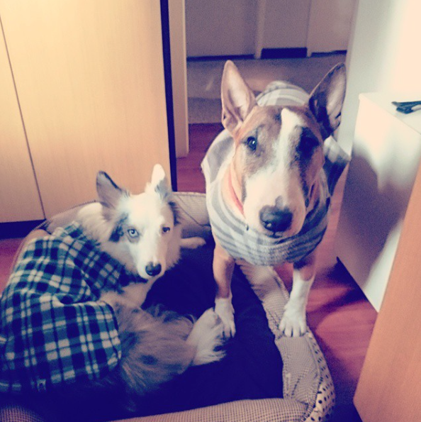 Os cães Google e Trinity. (Foto: Reprodução / Instagram)