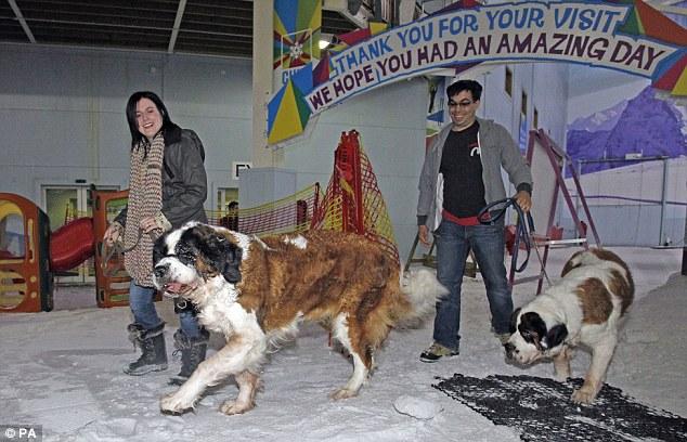 Alyson com a cachorra Sophia e seu marido levando o cão Yogi. (Foto: Reprodução / Daily Mail UK)