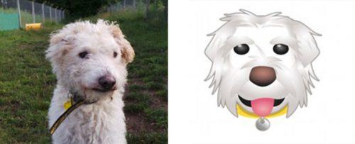 Os emojis foram inspirados em cachorros que estão para adoção na Dog Trust. Foto Reprodução