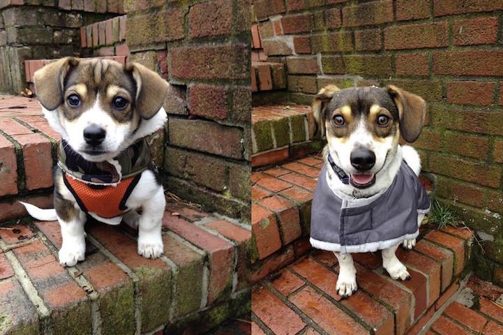 filhote-adulto-transformação-cachorros-11