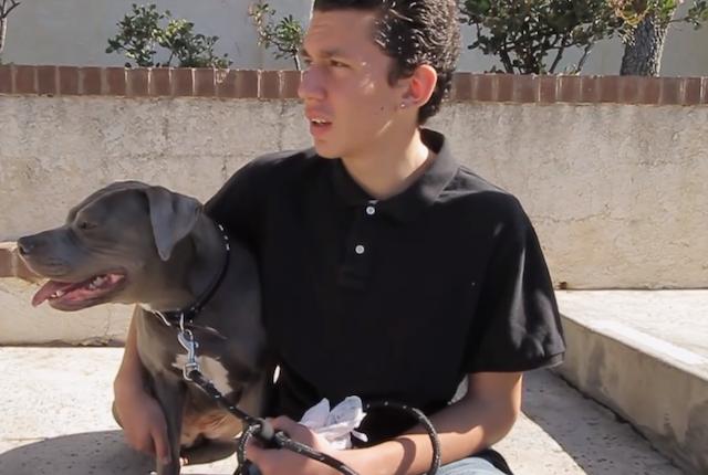 Joey e a cachorra Roxy se tornaram grandes amigos. (Foto: Reprodução / Youtube / Pawsitive)