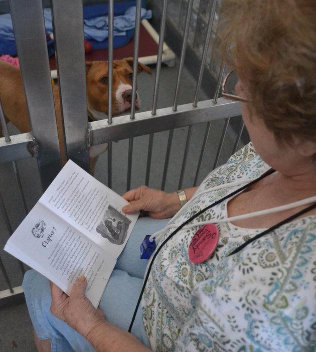 Sandy faz um belo trabalho voluntário e tem um papel importante na vida desses cães. (Foto: Reprodução / Huffington Post)