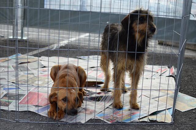 A ONG Cão Sem Dono levou esses cachorros para serem adotados. (Foto: Karina Sakita)