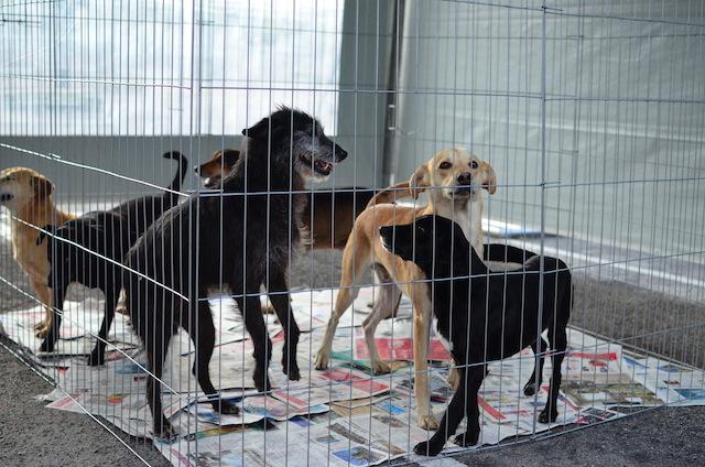 Eles precisam de um lar. (Foto: Karina Sakita)