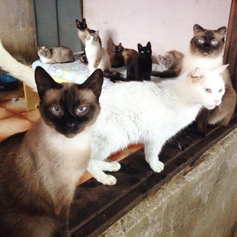 A dona Yolanda deixou 140 animais órfãos. (Foto: Reprodução / Facebook / Projeto Hopet)