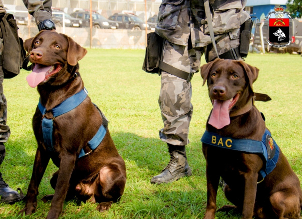 Na imagem os cães farejadores de explosivos  CHEFE e CLEO, filhos do cão  BOSS. Foto: SD Lopes (BAC).
