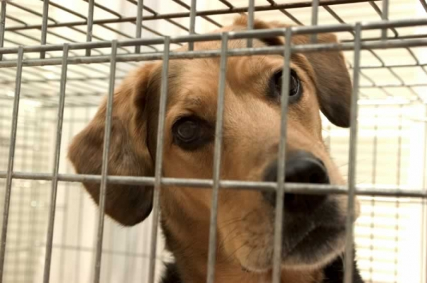 Cães e gatos não podem mais ficar em gaiolas ou vitrines de pet shops em Salvador. (Foto ilustrativa: Reprodução / PETA / Steve Goodwin)