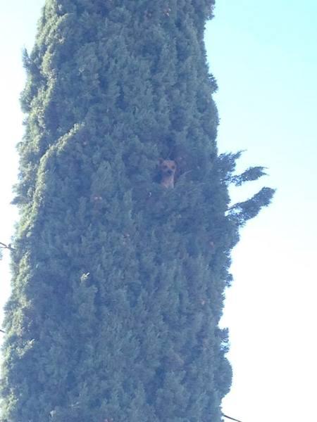 A cachorro subiu a mais de 7 metros de altura. (Foto: Reprodução / Facebook / Kern County Animal Services)