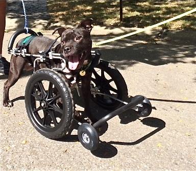 A cachorra Lola parece muito feliz por estar viva. (Foto: Reprodução / The Dodo)