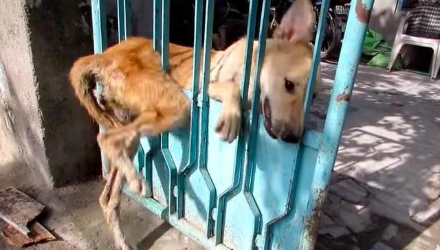 A cachorra ficou desesperada. (Foto: Reprodução / Youtube / Animal Aid Unlimited)