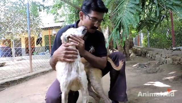 Lambidas de agradecimento. (Foto: Reprodução / Youtube / Animal Aid Unlimited)