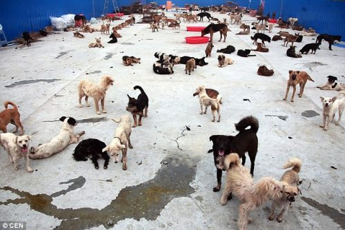 Cães no abrigo Sanduo Life Guarding Garden.(Foto ilustrativa: Reprodução / Daily Mail UK)