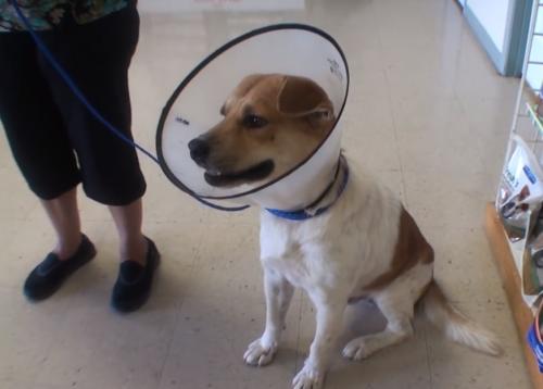 O cão saiu contente da clínica veterinária. (Foto: Reprodução / Youtube / Vet Ranch)