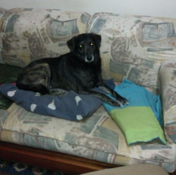 O cão Neguinho na casa onde vivia com seus tutores. (Foto: Reprodução / Instagram / G.A.R.R.A.)