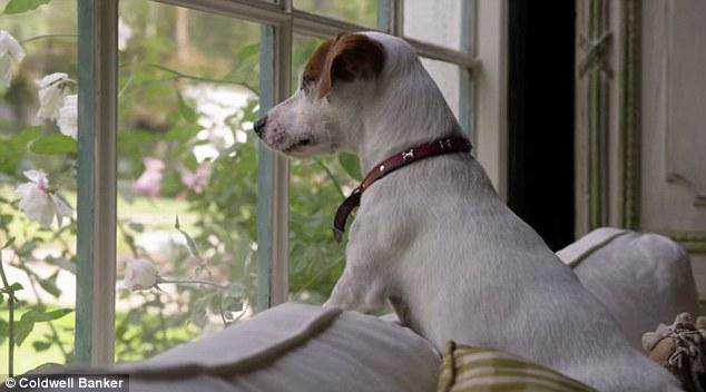 Cachorro esperando tutor chegar em casa. (Foto: Reprodução / Daily Mail UK)
