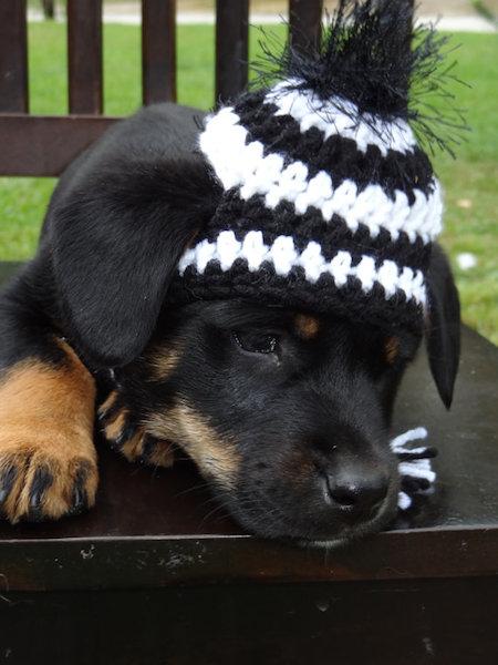 Gorros e chapéus de lã para cães - Portal do Dog 832f825d7aa