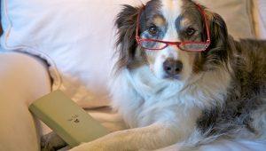 Mantenha a mente do seu cão idoso ativa. (Foto: Reprodução /  Dog Time)