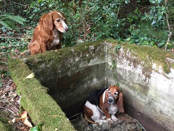cachorros-cisterna-noticia-01