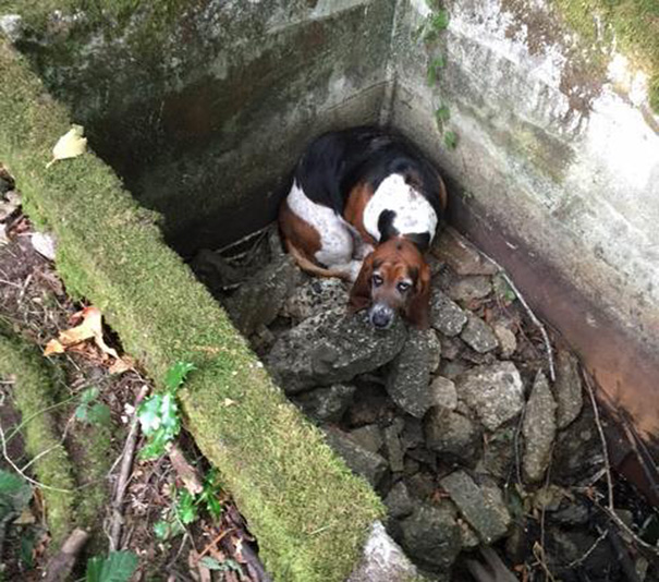 cachorros-cisterna-noticia-02