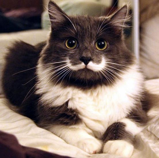 cachorros-gatos-bigode (10)