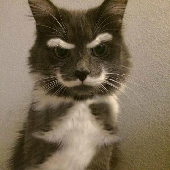 cachorros-gatos-bigode (12)