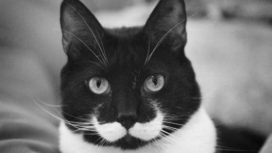 cachorros-gatos-bigode (13)