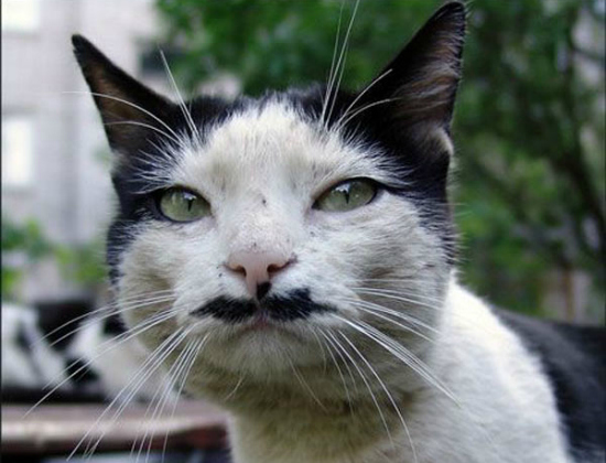 cachorros-gatos-bigode (15)