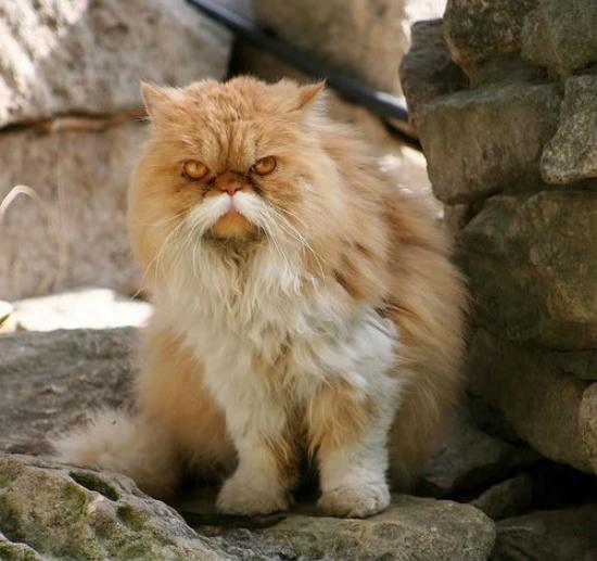 cachorros-gatos-bigode (3)