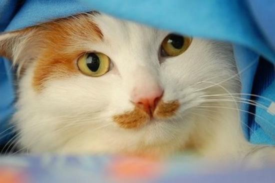 cachorros-gatos-bigode (5)