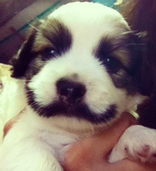 cachorros-gatos-bigode (8)