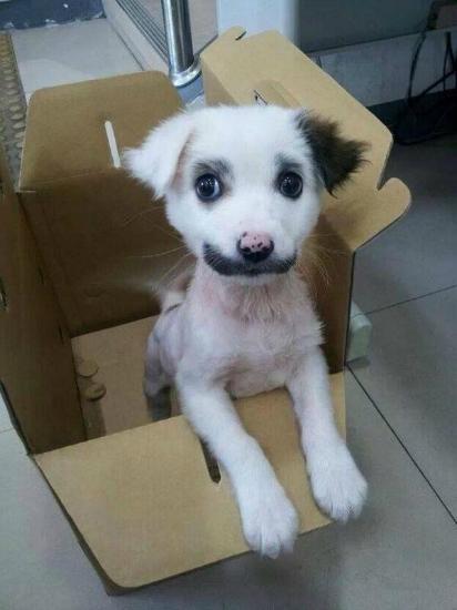 cachorros-gatos-bigode (9)