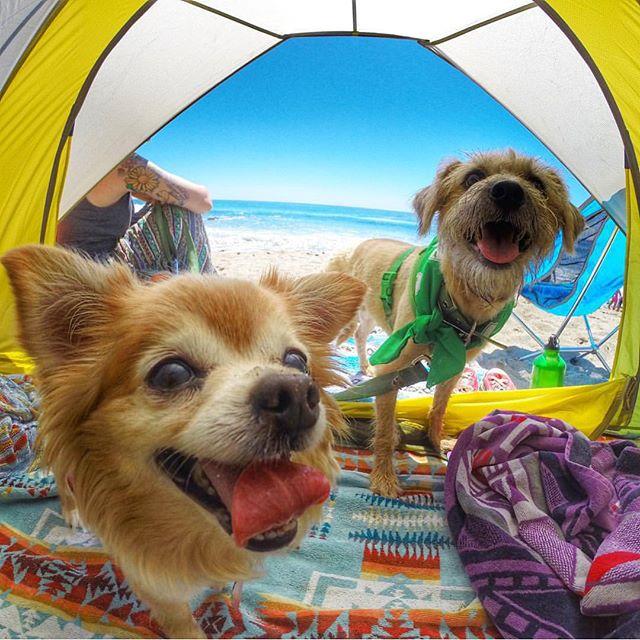 (Foto: Reprodução / Camping With Dogs)